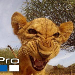 GoPro: Top 10 Animal Encounters