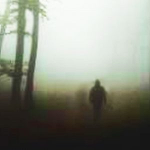 Top 10 Haunted Forests Where Evil Waits