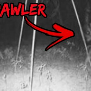 Top 10 Scary Crawler Sightings